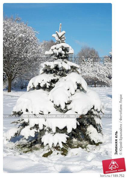 Купить «Зимняя ель», фото № 189752, снято 11 декабря 2017 г. (c) Юрий Брыкайло / Фотобанк Лори