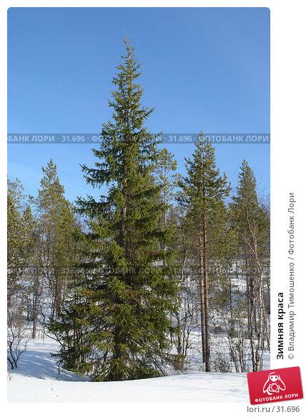 Купить «Зимняя краса», фото № 31696, снято 10 апреля 2007 г. (c) Владимир Тимошенко / Фотобанк Лори