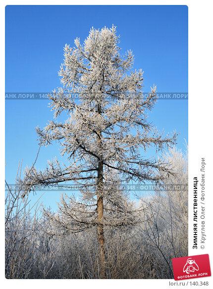 Зимняя лиственница, фото № 140348, снято 5 декабря 2007 г. (c) Круглов Олег / Фотобанк Лори