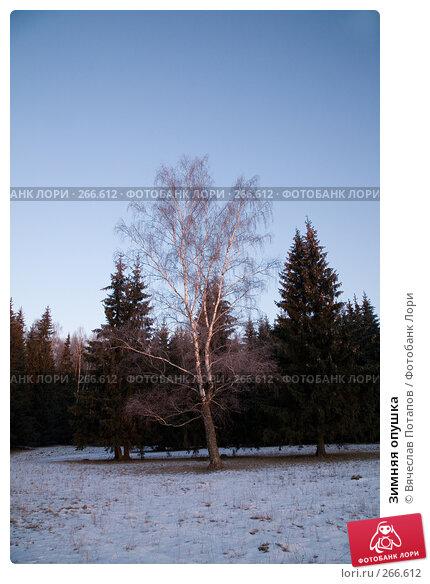 Зимняя опушка, фото № 266612, снято 1 января 2008 г. (c) Вячеслав Потапов / Фотобанк Лори