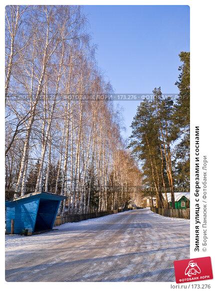 Купить «Зимняя улица с березами и соснами», фото № 173276, снято 2 января 2008 г. (c) Борис Панасюк / Фотобанк Лори