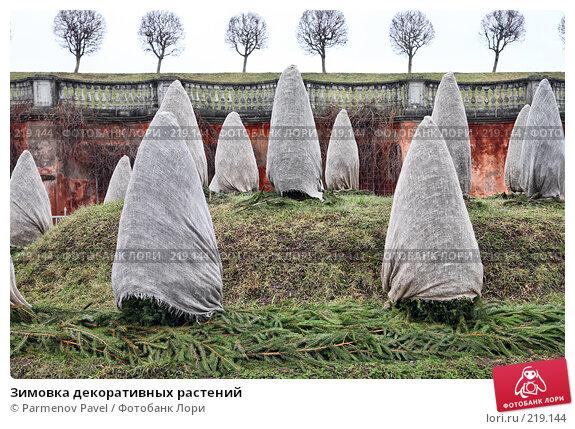 Купить «Зимовка декоративных растений», фото № 219144, снято 13 февраля 2008 г. (c) Parmenov Pavel / Фотобанк Лори