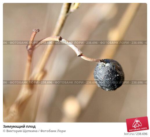 Зимующий плод, фото № 238696, снято 29 марта 2008 г. (c) Виктория Щепкина / Фотобанк Лори
