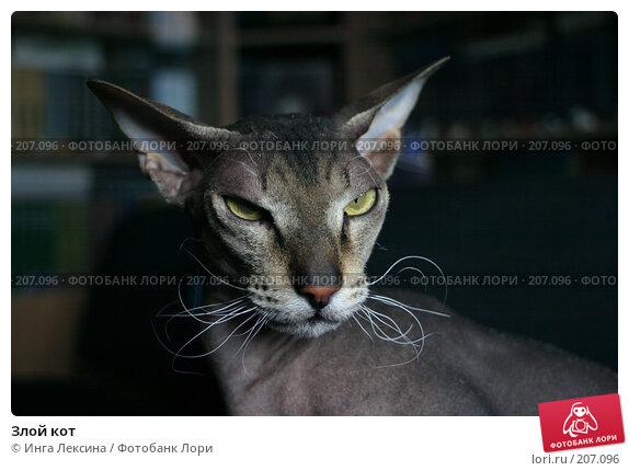 Злой кот, фото № 207096, снято 6 июня 2004 г. (c) Инга Лексина / Фотобанк Лори