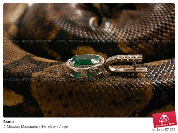 Змея, фото № 57272, снято 19 марта 2006 г. (c) Михаил Малышев / Фотобанк Лори