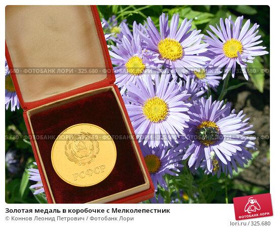 Золотая медаль в коробочке с Мелколепестник, фото № 325680, снято 11 июня 2008 г. (c) Коннов Леонид Петрович / Фотобанк Лори