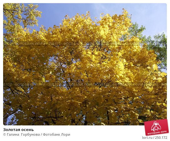 Золотая осень, фото № 250172, снято 21 октября 2006 г. (c) Галина  Горбунова / Фотобанк Лори