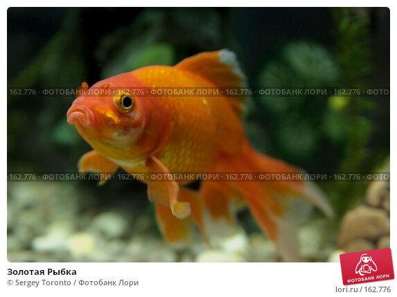 Золотая Рыбка, фото № 162776, снято 27 декабря 2007 г. (c) Sergey Toronto / Фотобанк Лори