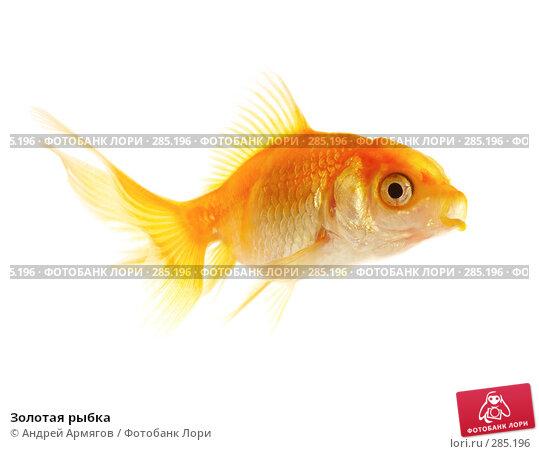 Золотая рыбка, фото № 285196, снято 19 июня 2007 г. (c) Андрей Армягов / Фотобанк Лори