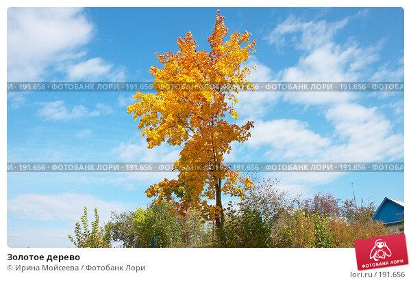 Купить «Золотое дерево», эксклюзивное фото № 191656, снято 26 сентября 2007 г. (c) Ирина Мойсеева / Фотобанк Лори