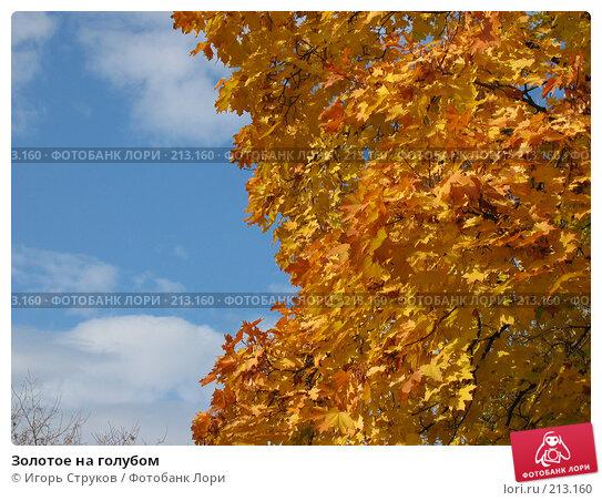 Золотое на голубом, фото № 213160, снято 24 октября 2005 г. (c) Игорь Струков / Фотобанк Лори