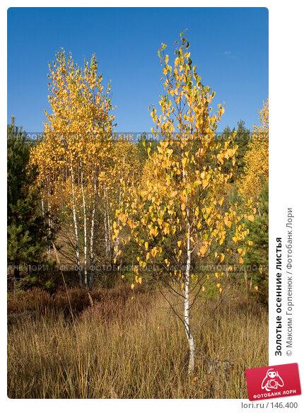 Золотые осенние листья, фото № 146400, снято 20 октября 2005 г. (c) Максим Горпенюк / Фотобанк Лори