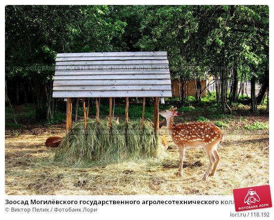 Зоосад Могилёвского государственного агролесотехнического колледжа, фото № 118192, снято 24 июня 2006 г. (c) Виктор Пелих / Фотобанк Лори