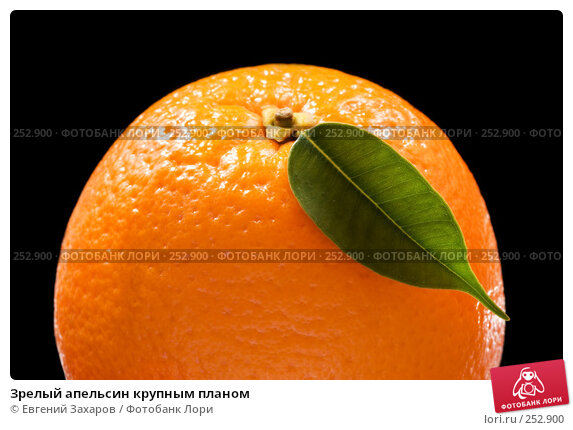 Зрелый апельсин крупным планом, эксклюзивное фото № 252900, снято 13 апреля 2008 г. (c) Евгений Захаров / Фотобанк Лори
